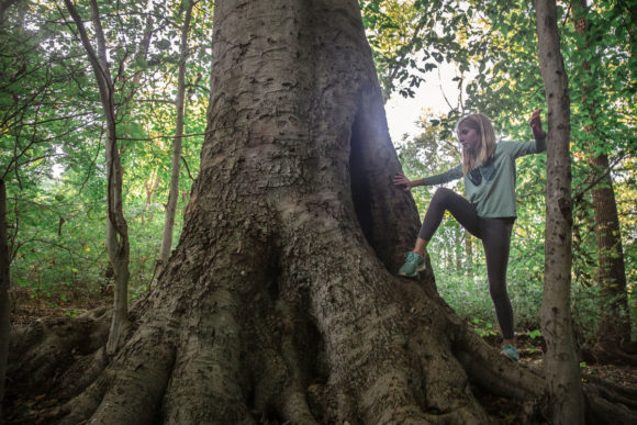 Girl climbs a tree in the woods.