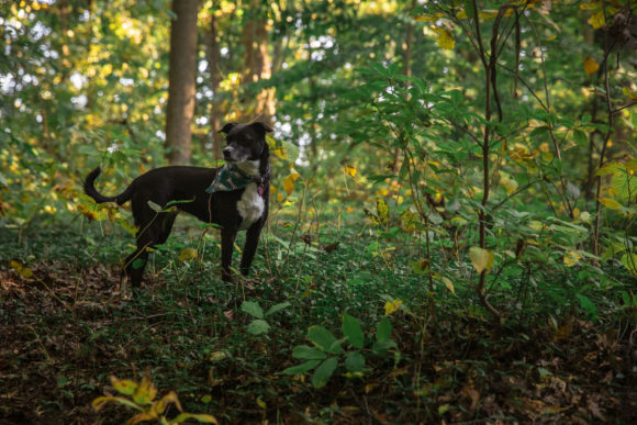 Dog in the woods.