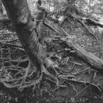 Child climbing tree roots.