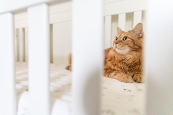 Orange cat sitting in baby's crib.